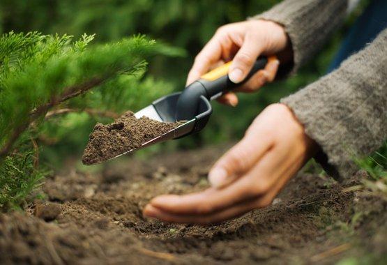 Omogočite novim rastlinam odličen začetek