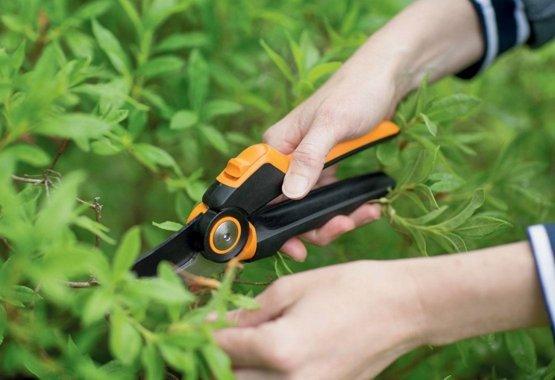 Očistite drevje in grmovje