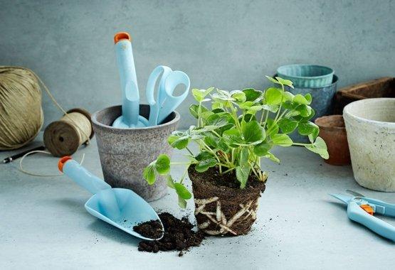 Naredite vaš vrt še bolj barvit